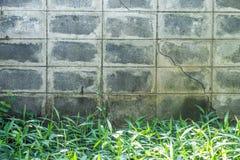 Betonmauer und Gras Stockfoto
