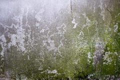Betonowa ściana i mech; betonowa ściana zakrywająca z liszajem Obrazy Stock