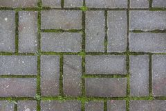 Betonowa płytka na zmielonym bruk ścieżki abstrakta wzoru tekstury tle z trawą Obrazy Royalty Free