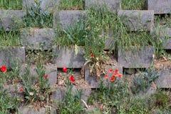 Betonowy blok ściana z niektóre zielenią Obraz Stock