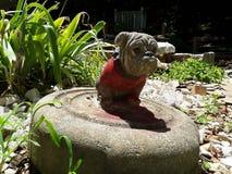 Betonowy buldog w ogródzie zdjęcie royalty free