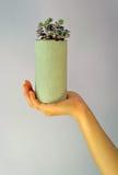 Betonowy kwiat pots-1 Zdjęcie Royalty Free