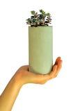 Betonowy kwiat pots-5 Zdjęcia Royalty Free