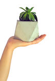 Betonowy kwiat pots-4 Obraz Royalty Free
