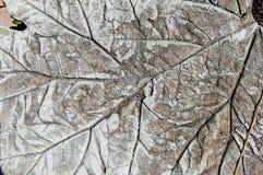 Betonowy liścia wzór z plamami Fotografia Stock