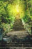 Betonowy schodka i drzewa las Obrazy Stock