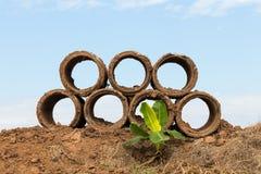 Betonrohr mit Banane Stockfotografie