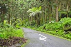 Betonstraße mit einem Drehen kennzeichnen innen den Wald Stockbild