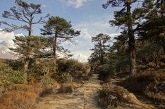 Betoverend Aziatisch boslandschap Stock Afbeelding