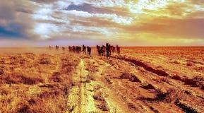 Betpakdala干草原南哈萨克斯坦 免版税库存图片