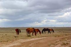 Betpakdala-estepa en Kazajistán meridional Foto de archivo