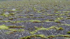 Beträchtlicher flacher Bereich mit grünem Moos und Kies Stockbilder