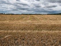 Beträchtliches Feld der geernteten Gerste, Grafschaft Carlow, Irland Stockbilder