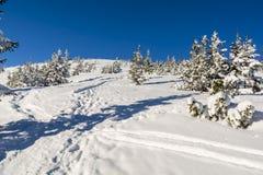 Beträdd bana i snön på lutningen mellan granar Royaltyfri Bild