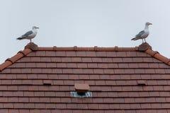 Betrügen Sie auf dem Dach eines Hauses in der Stadt lizenzfreies stockfoto