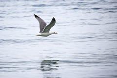 Betrügen Sie im Flug auf den Wellen des Meeres stockbilder
