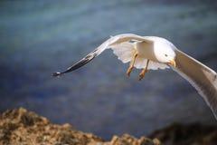 Betrügen Sie im Flug auf den Wellen des Meeres stockfoto