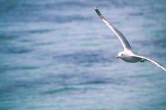 Betrügen Sie im Flug auf den Wellen des Meeres stockfotografie