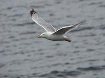 betrügen Sie Vogel im Punkt der Landung auf dem Meer stockbild