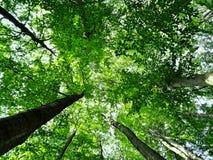 Betrachten der Treetops Lizenzfreie Stockfotos