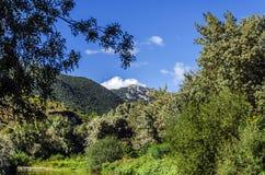 Betrachten des Berges Stockfotos