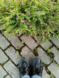 Betrachten des grassflower Stockfotografie