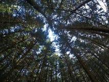 Betrachten des Himmels in einem Wald lizenzfreie stockfotografie