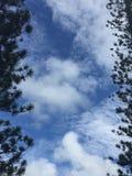 Betrachten des Himmels hinter Bäumen stockbild