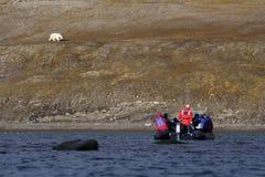 Betrachten eines Eisbären stockfotografie