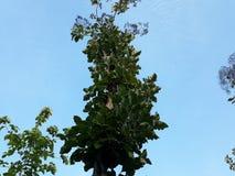 Betrachten Sie den grünen Baum in einem schönen blauen Himmel lizenzfreie stockbilder