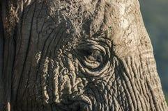 Betrachten Sie die langen Wimpern in diesem Bild des Elefanten Lizenzfreies Stockbild