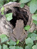 Betrachten Sie diesen netten Frosch! Lizenzfreies Stockbild