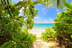 Betrachten Sie erstaunlichen Strand in Seychellen durch wilde grüne Blätter Stockfotografie