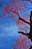 Betrachten Sie oben dem Himmel Lizenzfreies Stockfoto