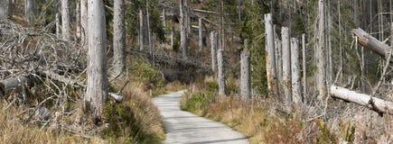 Betrachten Sie zerstörten Wald auf Bohmen-Wald Sumava lizenzfreie stockfotos