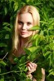 Betrachtet uns blond im Wald Stockfoto