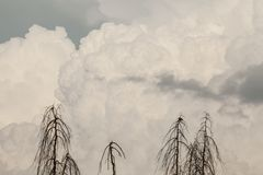 Betrekt de silhouet dode bomen op grijze hemel achtergrond en een vogel in de tijd van het de herfstseizoen Royalty-vrije Stock Fotografie