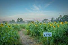 Betreten Sie den Weg des Sonnenblumenlabyrinths Lizenzfreie Stockfotos
