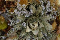 Betriebs- und der Blumetrockene Zusammensetzung stockfotos