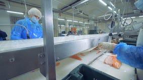 Betriebsarbeitskräfte schneiden Leisten von Forellen Fischfabrik stock video footage
