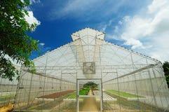 Betriebsbaumschule des organischen Gemüses Stockbild