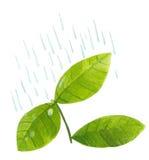 Betriebsblätter im Regen Stockfoto