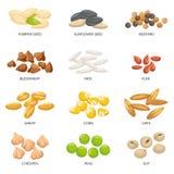 Betriebssamen Getreidekörner, Kichererbsennüsse und Zellulosekorn Nuss und Samen lokalisierte Karikaturvektorillustration vektor abbildung