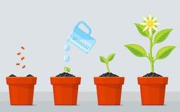 Betriebswachsende Stadien Zeitachse infographic vom Pflanzen des Baumprozesses Lizenzfreies Stockbild