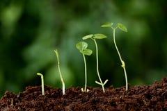 Betriebswachstum-neue Anfänge Stockbilder