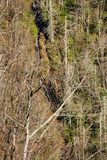 Betseys skały spadki, Pólnocna Karolina, usa Obrazy Royalty Free