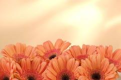 Bett der Blumen Stockfotos