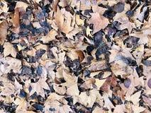 Bett der getrockneten Blätter stockbilder