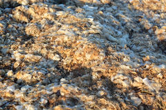 Bett der Meerespflanze auf dem Strand Lizenzfreie Stockbilder