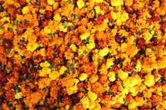 Bett der Ringelblumen Lizenzfreie Stockbilder